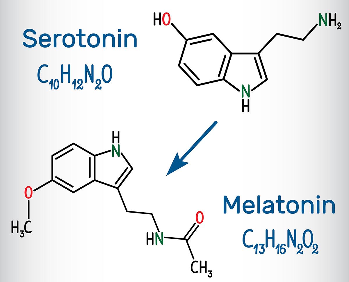 Neurotransmitter_927864090_kl