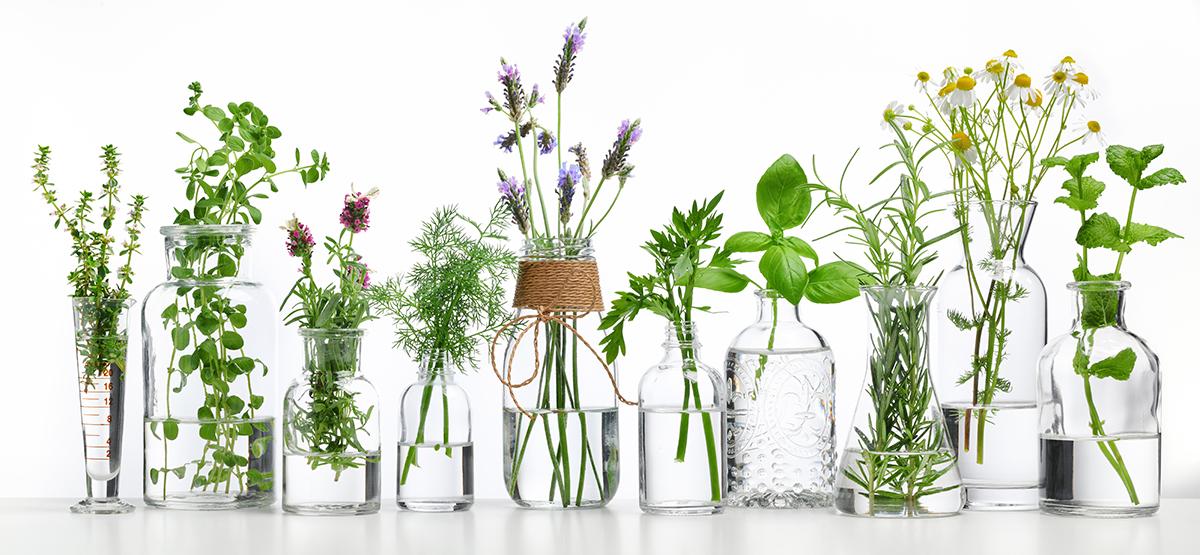 Pflanzen-Glas-81351293-istock_kl
