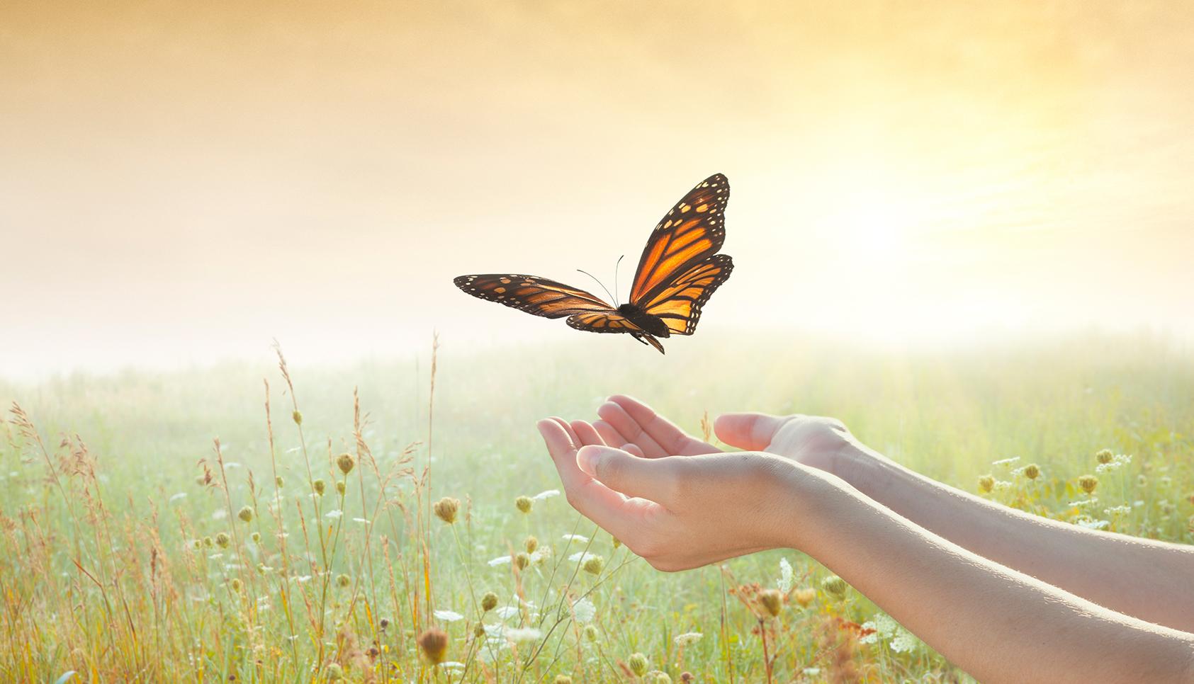 Girl releasing a butterfly over a sunset field